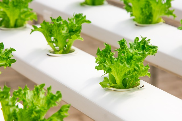 Demand for Horticultural Lighting is Driving Research and Development